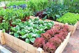 vegetable garden beds surroundings biz