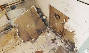 Mold Remediation | Upper Restoration