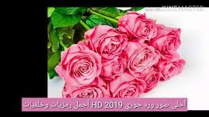 أحلى صور ورد جوري 2019 Hd أجمل رمزيات وخلفيات وبطاقات ورود وأزهار
