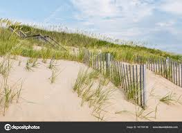 Sand Dunes Beach Grass And Sand Fences At Nags Head Stock Photo C Sherryvsmith 161769146