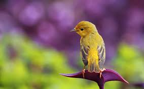 صور طيور جميلة اجمل صور طيور