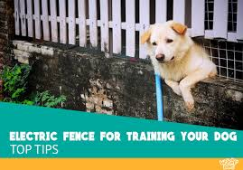 How To Train Your Dog To An Electric Wireless Fence Woof Dog