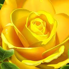 ورد اصفر طبيعي جميل صور ورد وزهور Rose Flower Images