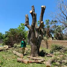 Tree Removal Melbourne | Tree Removal Palm Bay | Tree Planting Brevard