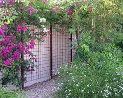 Concrete Reo Mesh Used As A Trellis Modern Landscaping Metal Trellis Fence Design