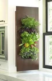 an edible living wall in the kitchen