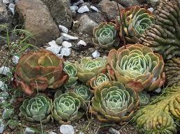 cactus arid flower