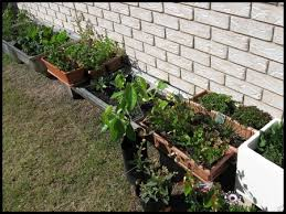 growing vegetables in containers for