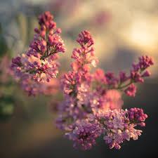 صور أجمل زهور ورد خلفيات موبايل ولابتوب تحميل مجاني صور خلفيات