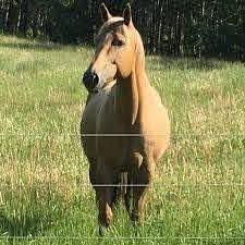 Big Prairie Store Electrobraid Horse Fence Home Facebook