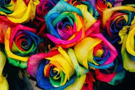 ورود ملونة جميلة