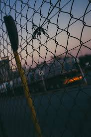 Hd Wallpaper Chain Link Fence Prison Animal Bird Sphere Barricade Lock Wallpaper Flare