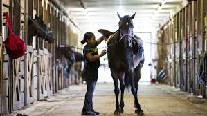 Horse riding program teaches sport of kings to at-risk youth