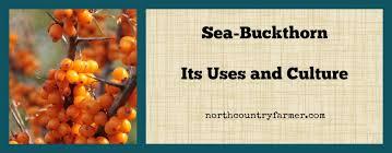 sea buckthorn plant profile north
