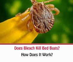 does bleach kill bed bugs