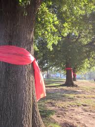 We Used Full Sized Red Table Cloth S From Store To Tie On Our Trees On Campus Red Ribbon Week Red Ribbon Red Table