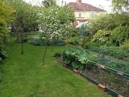 backyard vegetable garden layout the