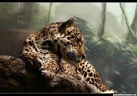 jaguar hd wallpaper windows 10 themes net