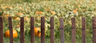 Fence Pumpkin Patch Land For Good