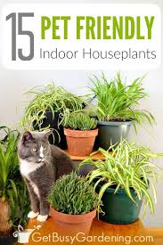 15 indoor plants that are safe for cats