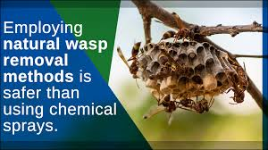 wasp nest removal spray home quicks