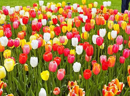 spring flower shows and festivals in