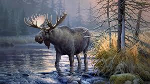 hd wallpaper elk s moose