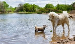 Social Dogs Safe People Off Leash Dog Parks You Can Explore During The Covid 19 Pandemic Uchealth Today