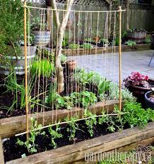 Making A Pea Trellis With Kids Diy Garden Trellis Plants Garden Trellis