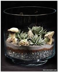 succulent garden in a glass bowl