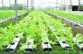 hydroponic garden in your backyard
