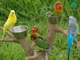 صور طيور متحركة تجنن بيوتي