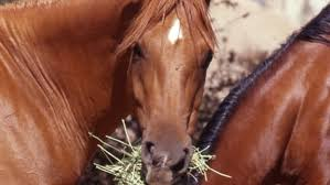 equine nutrition in the 21st century