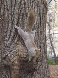 homemade squirrel repellent for trees