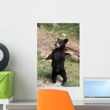 Young Black Bear Cub Wall Decal Wallmonkeys Com