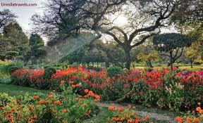 buddha garden buddha jayanti park