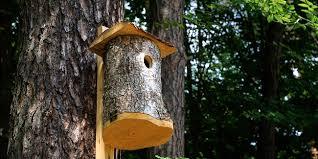 ment fabriquer un nichoir à oiseaux