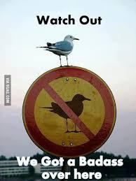 Badass seagull. - 9GAG