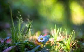 Hình nền : Ánh sáng mặt trời, thiên nhiên, cây, Vĩ mô, màu xanh lá ...