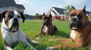 Best Wireless Dog Fence Review Best Top Care With Dogs