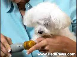pedipaws instructional video you