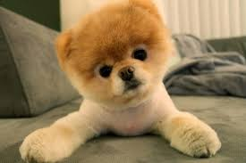 20 cutest puppies that will melt your