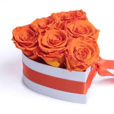 بوكس ورد جوري لون برتقالي ليتل روز Little Rose
