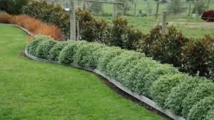 Landscaping Along A Fence Ideas Tlc Landscapes Llc