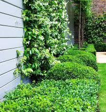 Wonder Wall The Climbing Plants That Can Improve Your Garden Houzz Nz
