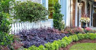 Top 5 Plants For Easy Care
