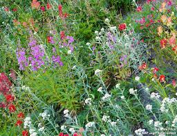 how to create a wildflower meadow the