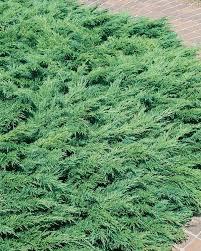 juniper calgary carpet standard for