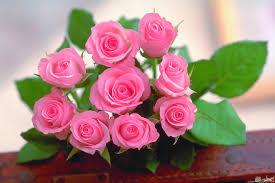10 صور ازهار جميلة بألوان زاهية ورائعة