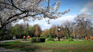 Ce vrea sa faca Firea in Cismigiu: O ''autostrada de pietris'' ar putea  spinteca cel mai vechi parc din Bucuresti | Mobile